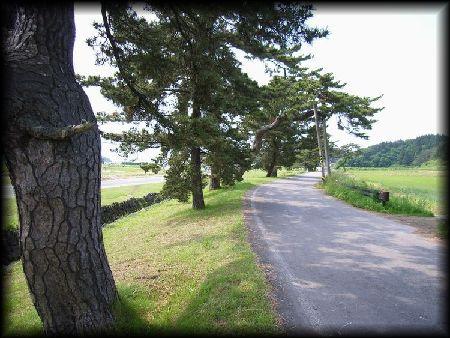 羽州街道松並木(能代市檜山)